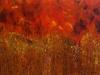 zen-forest-fire30x48