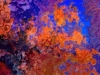 Tiina Moore - Blazing Larches, Digital Print